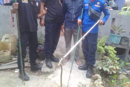 Evakuasi Ular di Jl. Barito 3
