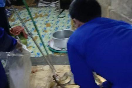 Evakuasi Ular Jl. Sriwijaya Belakang Kantor Gapensi