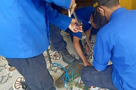 Evakuasi Biawak Di Jl. Sultan Taha