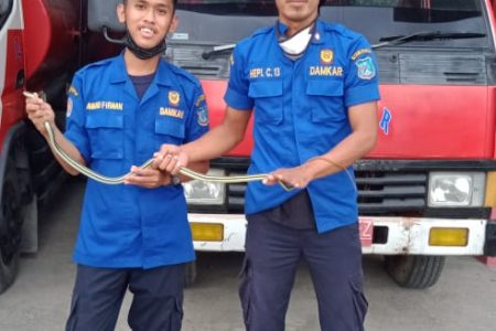 Evakuasi Ular di Komplek Permata Biru Rt.16
