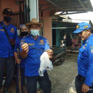 Evakuasi Ular di Jl. Manunggal I