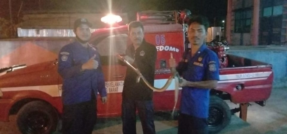 Evakuasi Ular Jl. Sidodadi Beringin Ujung Kel. Patunas